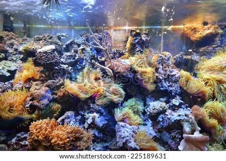 marine aquarium on display in a zoo - stock photo