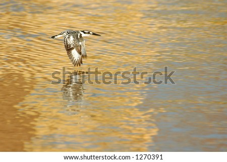 Marine bird on golden lake