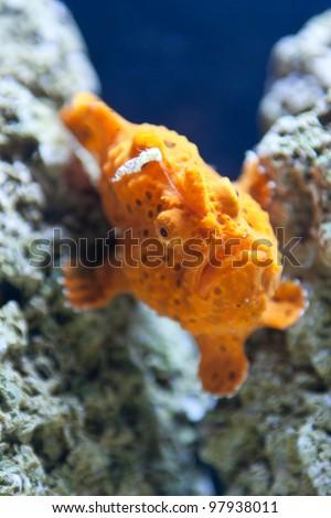 Marine fish - stock photo
