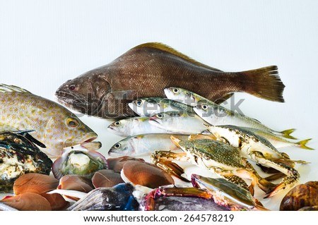 Marine fish isolate on white. - stock photo