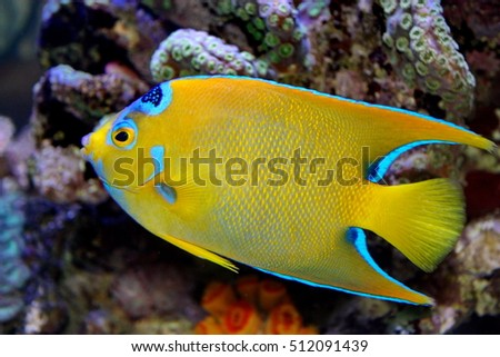 marine fish live in coral reef under the sea