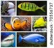 Marine life collage composed of pictures with underwater theme. - stock photo