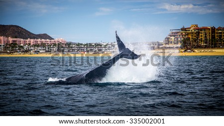 Marine Life on a Whale Watching Tour in Mexico - stock photo