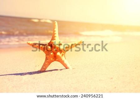 Marine life. Starfish on the sunny beach. - stock photo