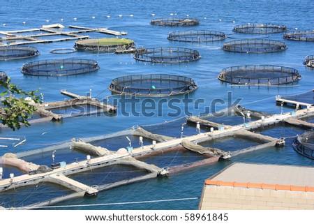 marine open water fish farm in La Spezia Italy - stock photo