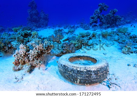Marine pollution in the tropical reef of the red sea  - stock photo