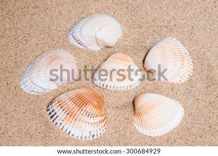 marine shells  on the  sand, sea mood background, vacations wallpaper.  - stock photo