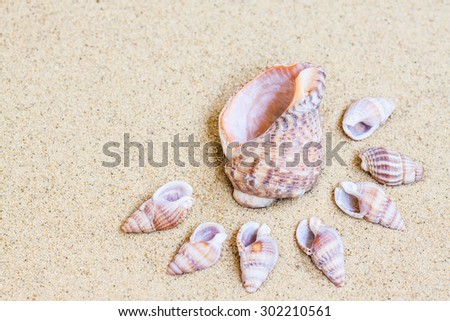 Marine Shells  on the  sand, Sea mood wallpaper. Vacations , holidays, traveling background. - stock photo