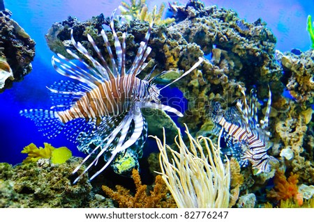Marine tropical fish. Colorful exotic little fish - stock photo