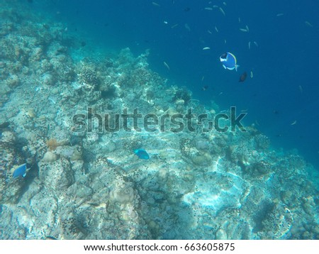 Marine Underwater Life in a turquoise deep lagoon on the Maldives.