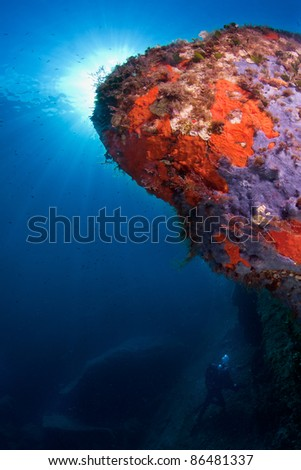 Marine view of mediterranean sea-life with underwater photographer in background - stock photo