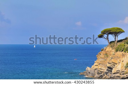 maritime pine at the edge of a cliff on blue sea background - stock photo