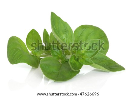 Marjoram herb leaf sprig isolated over white background with reflection. - stock photo