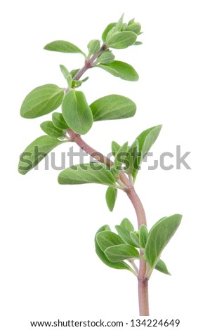 Marjoram Herb on White Background - stock photo