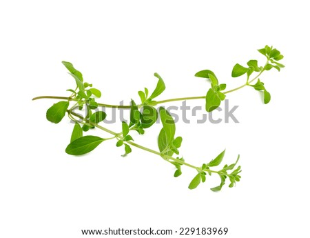 marjoram isolated on white - stock photo