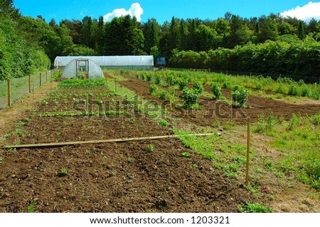 Market Garden - stock photo