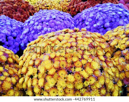 Marketplace with colorful autumn chrysanthemums. Quebec, Canada.