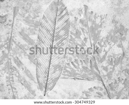 marks of leaf on gay concrete background