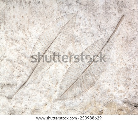marks of leaf on the concrete pavement. - stock photo