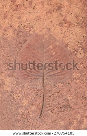 marks of leaves on the concrete - stock photo