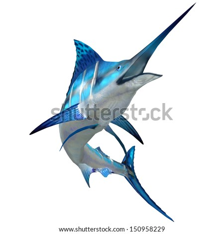 Marlin Fish on White - The Blue Marlin is a popular big game fish for fishermen and inhabits oceans throughout the world. - stock photo
