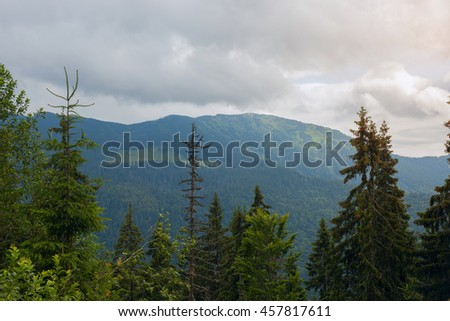 Marmarosy ridge in the Carpathian mountains, Ukraine. Cloudy morning in the mountain  spruce forest. - stock photo