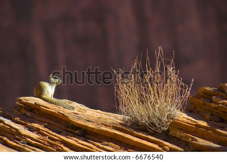 Marmot sitting on the sandstone of  Canyon de Chelly National park - stock photo
