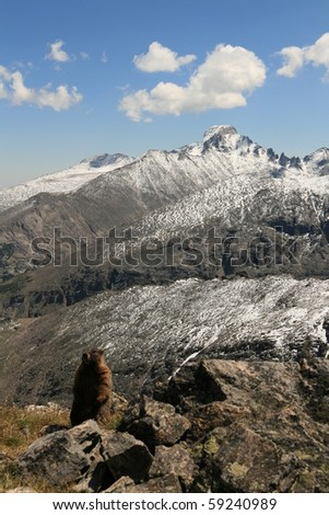 Marmot surveying the scene in the Rocky Mountains - stock photo