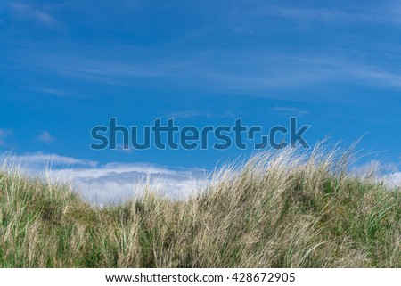 Marram grass, beach grass in sand dunes  - stock photo