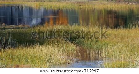 Marsh - stock photo