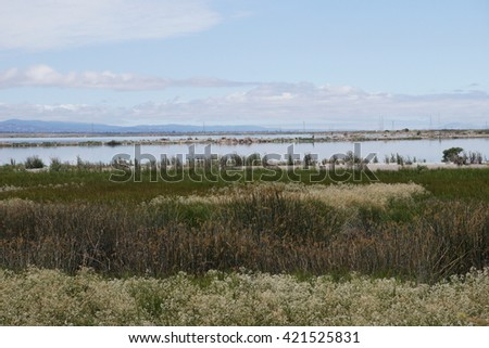 Marsh in California, water plants in bloom - stock photo
