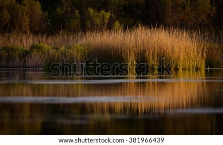 Marsh Morning Light Reflection - stock photo
