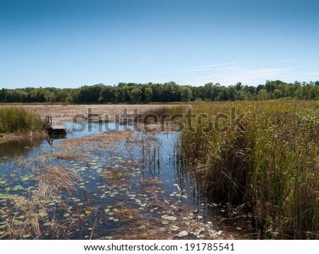 Marshland - stock photo