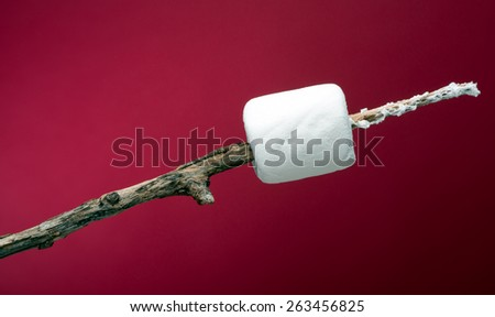 Marshmallow skewered on a stick and ready to roast over a campfire. Photographed in the studio with red paper backdrop.  - stock photo