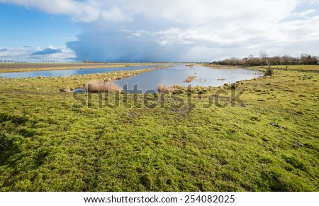 Marshy nature area in the Netherlands on a bright day in the winter season. - stock photo