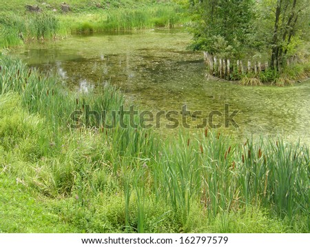 Marshy pond. - stock photo