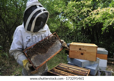 MARTINIQUE - March 14: A close-up image of bee keeper at Martinique, Caribbean Island - stock photo