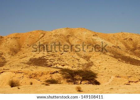 Masada - stock photo