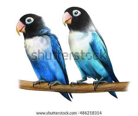 Masked lovebird drawing agapornis personatus