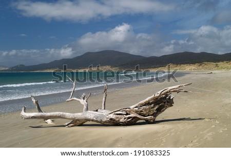 Mason Bay beach, Stewart island, New Zealand - stock photo