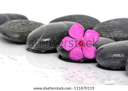 massaging stones wet with pink flower - stock photo