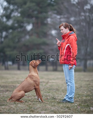 Master and her obedient (rhodesian ridgeback) dog - stock photo