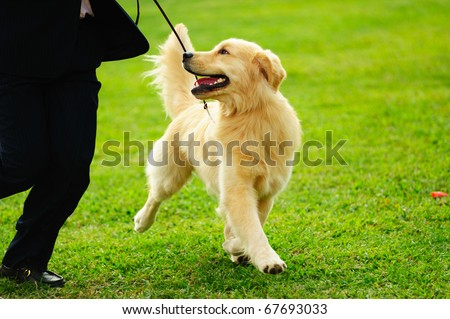 Master playing with his little golden retriever dog on the lawn - stock photo