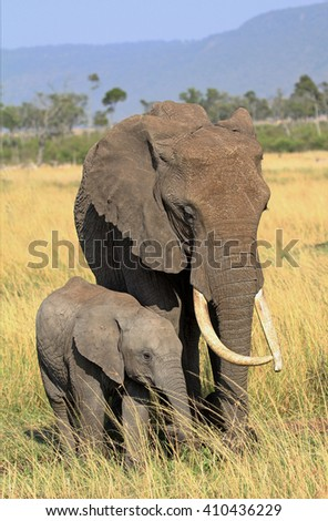 Matriarch elephant and her calf standing on the African plains with a natural mountainous backdrop in the Masai Mara - Kenya - stock photo