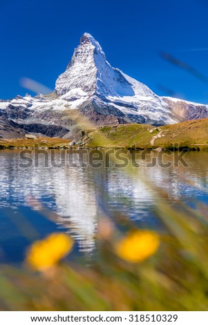 Matterhorn with relfection in StelliSee against flowers, Zermatt, Switzerland