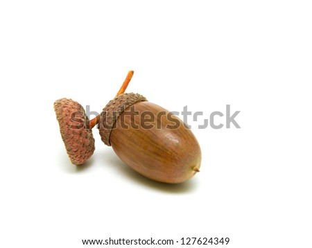 mature acorn isolated on white close-up