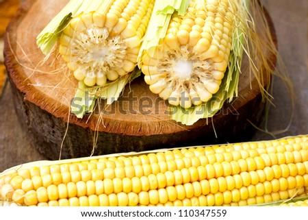 mature corn - stock photo