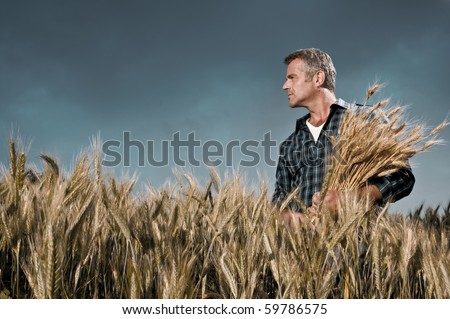 Mature farmer looking with satisfaction at his cultivated field with a bunch of ripe wheat after a working day under a dramatic sky - stock photo