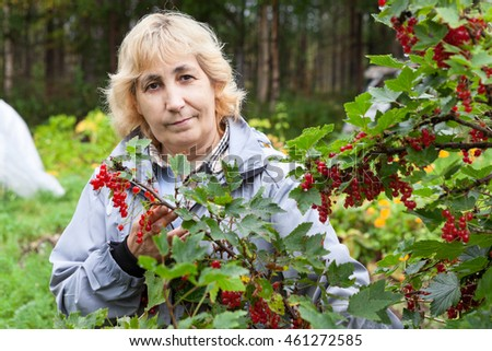 Mature gardener standing near bush with ripe red currant berries