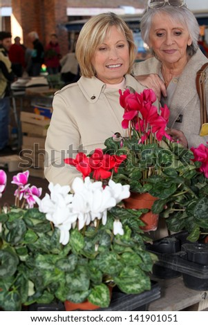 mature ladies in open air market choosing plants - stock photo